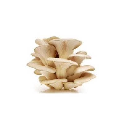 Flat Mushroom (Oyster)-500 Grm